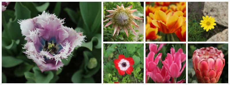 Mediterranean Blooms