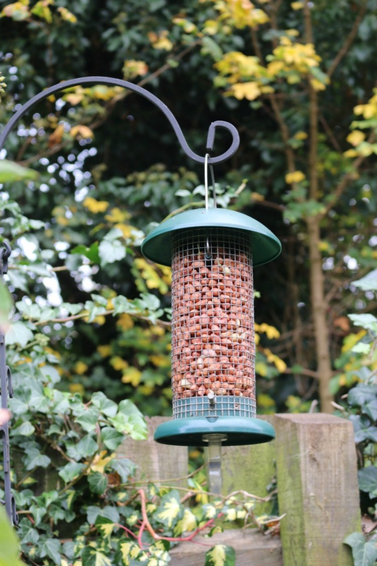 Looking after our garden birds