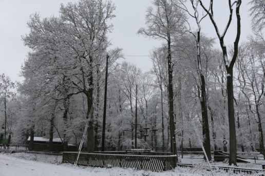 Tree Ninja Salcey Forest