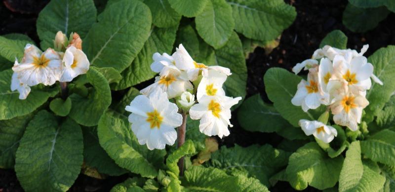 Flowers in January Waddesdon Manor
