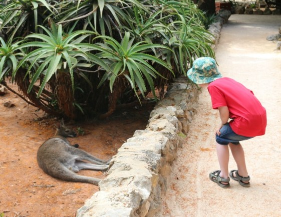 Enjoying a day out at Zoo de Lagos in the Algarve