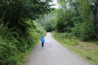 A walk through Cardinham Woods in the rain