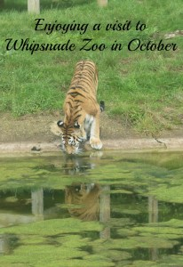 enjoying-a-visit-to-whipsnade-zoo-in-october-21a