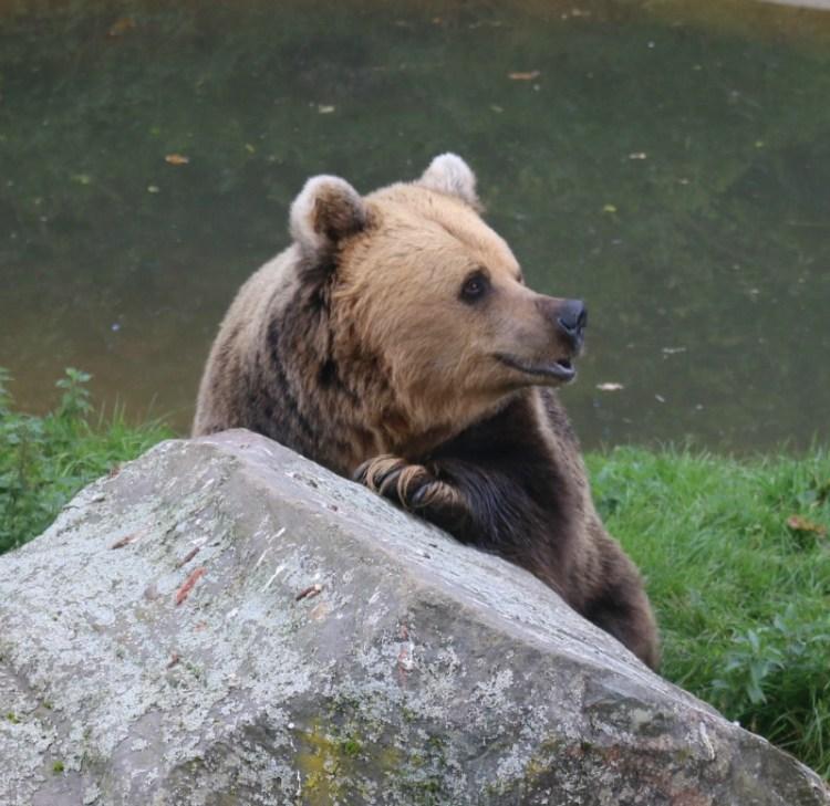 The bear necessities - Silent Sunday My Sunday Photo 091016