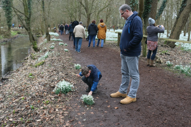 Snowdrop Spotting at Welford Park