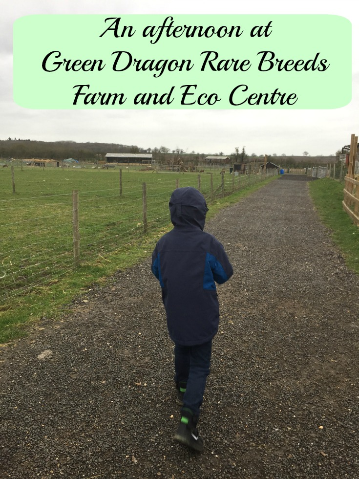 An afternoon at Green Dragon Rare Breeds Farm and Eco Centre