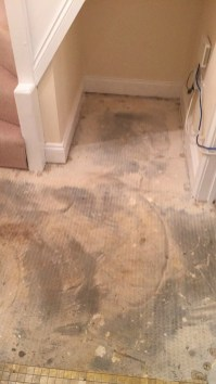 Getting used to new flooring downstairs