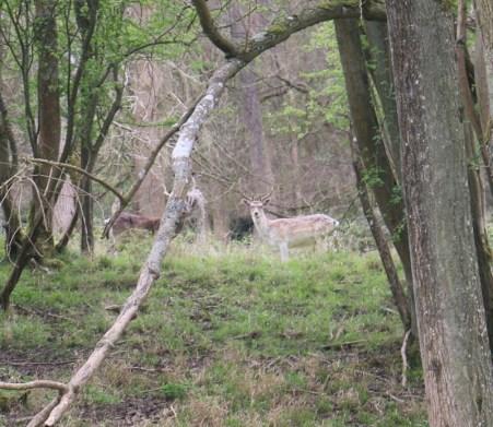 Schleich European Forest Dwellers set