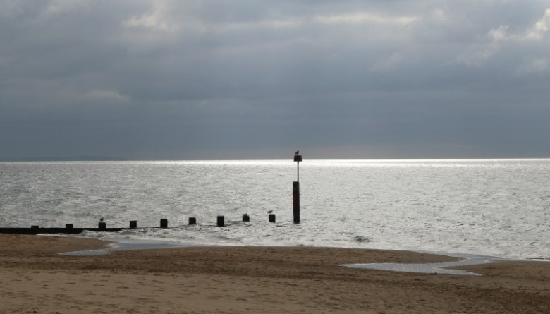 Sitting Gull - My Sunday Photo 160417