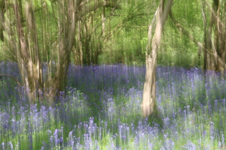 Enjoying the bluebells at Wytham Woods