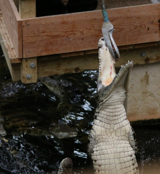 Taking photographs at Crocodiles of the World