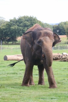 Seeing old friends at Whipsnade Zoo 55