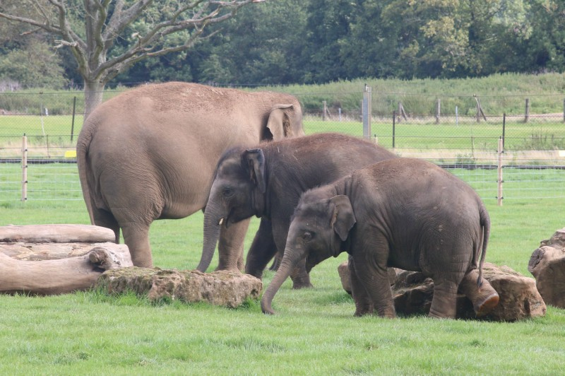 Seeing old friends at Whipsnade Zoo