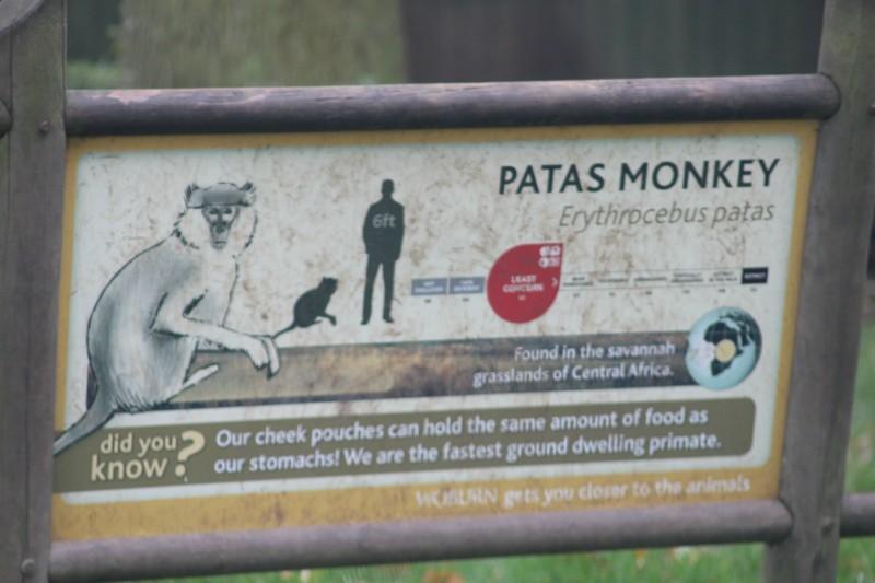 Exploring Woburn Safari Park
