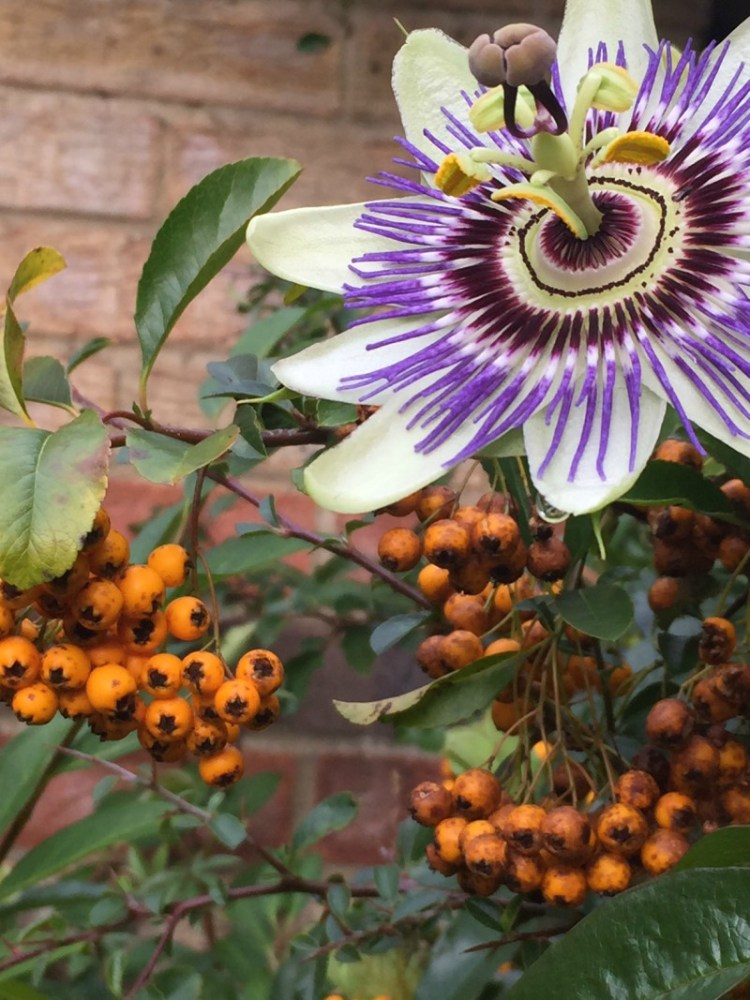 Autumnal Colour - My Sunday Photo 191117