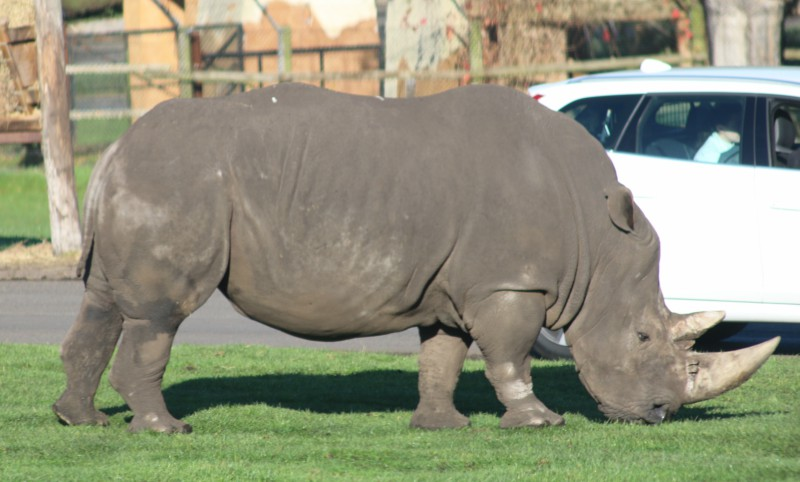 Exploring West Midland Safari Park