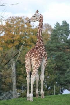 Exploring West Midland Safari Park