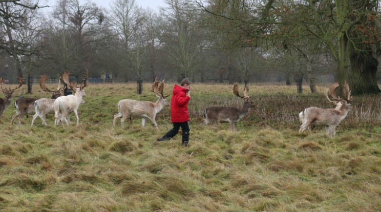Dancing with Deer - My Sunday Photo 140118