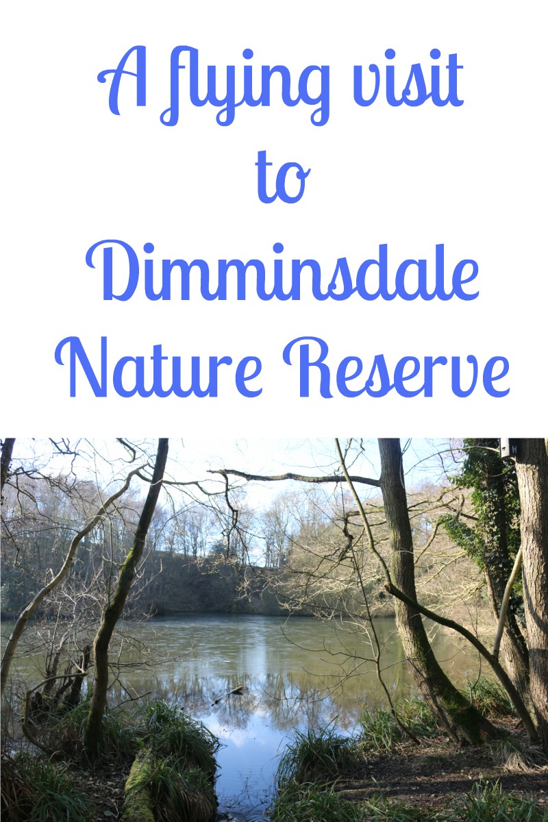 A flying visit to Dimminsdale Nature Reserve