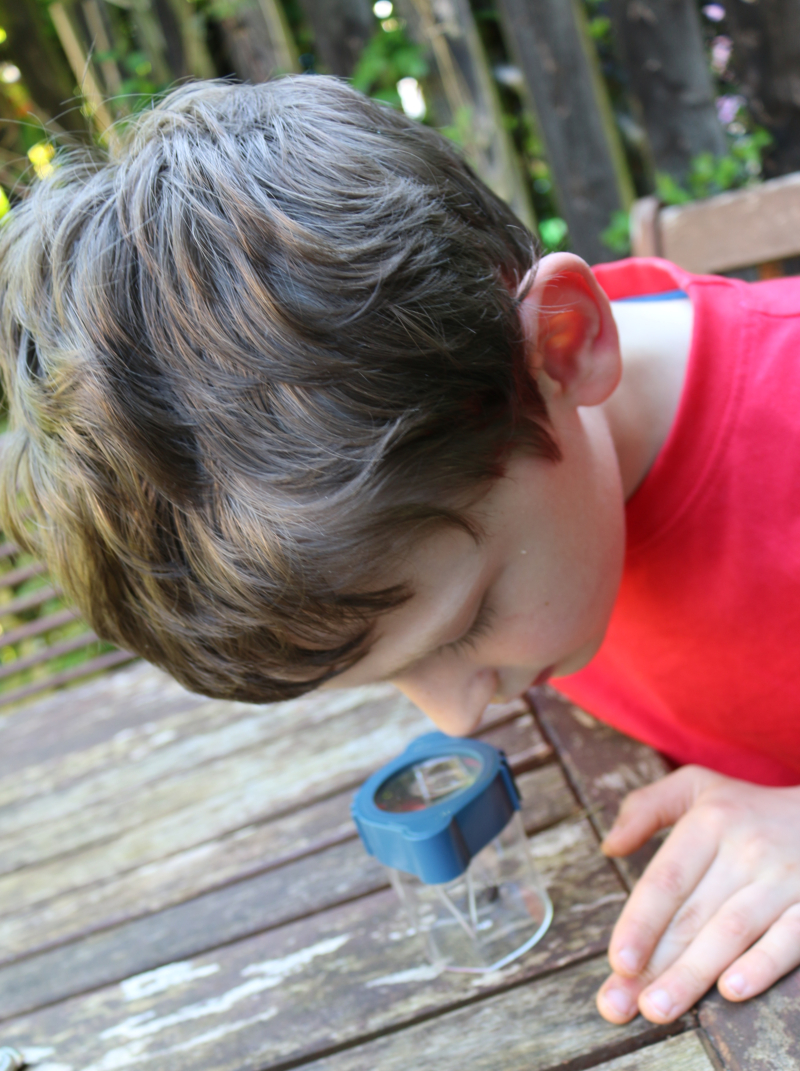 Celebrating Outdoor Classroom Day with a garden bug hunt
