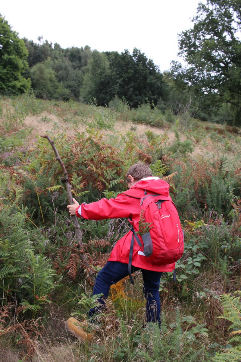 Bug hunting on Headley Heath