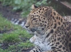 Exploring Chimpanzee Eden and beyond at Twycross Zoo