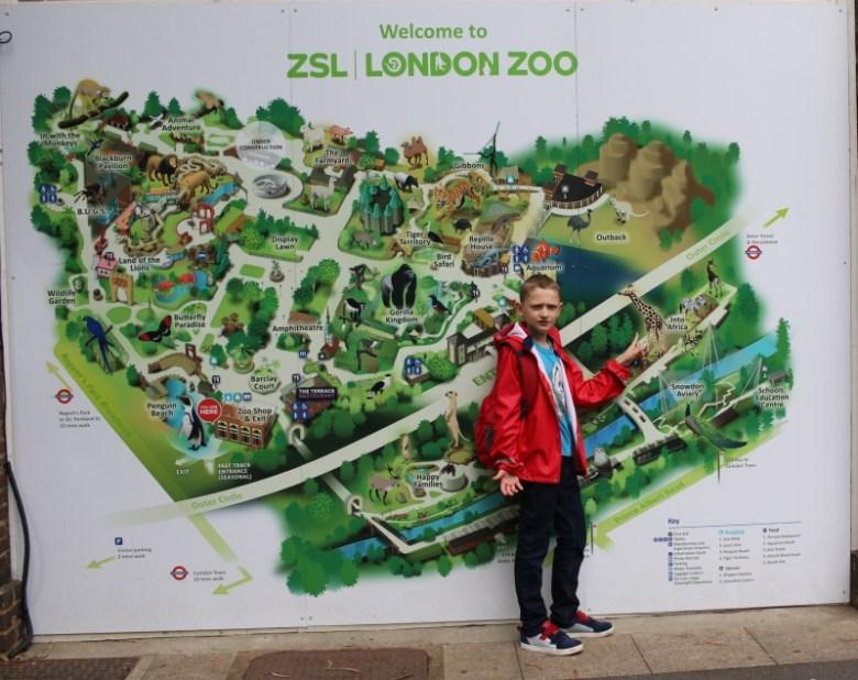 Exploring London Zoo