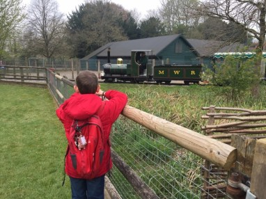 Discovering BRICKOSAURS at Marwell Zoo