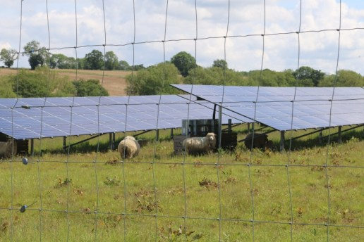 sheep and solar panels