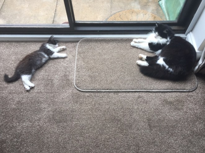 Kitten update: Paddington is 13 weeks old