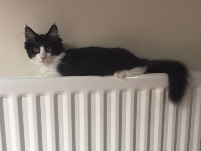 kitten on radiator