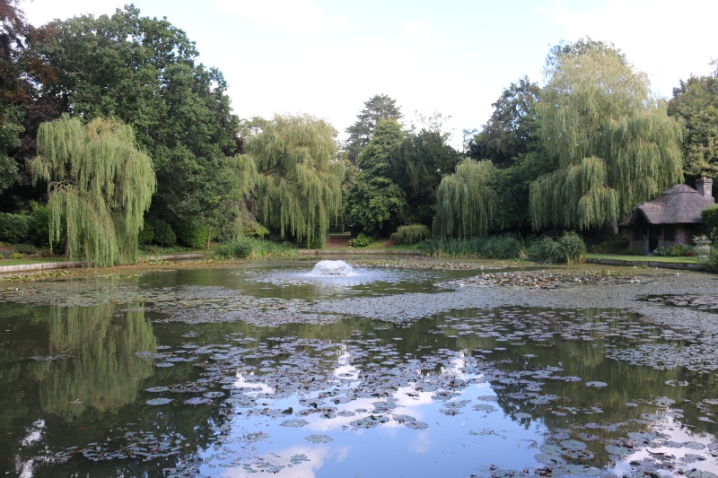 Lily pond at Ascott House