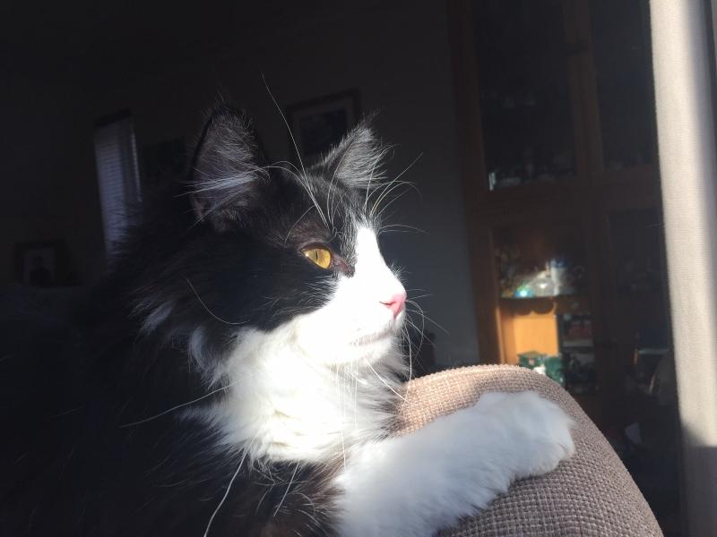 Paddington kitten