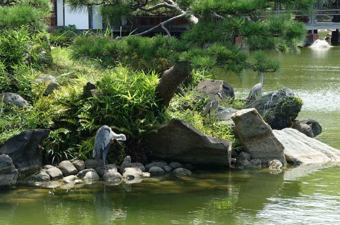 清澄庭園29 鶴島の鳥