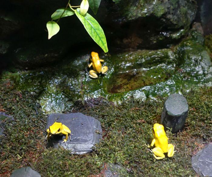 Sunshine aquarium 黄色いカエル