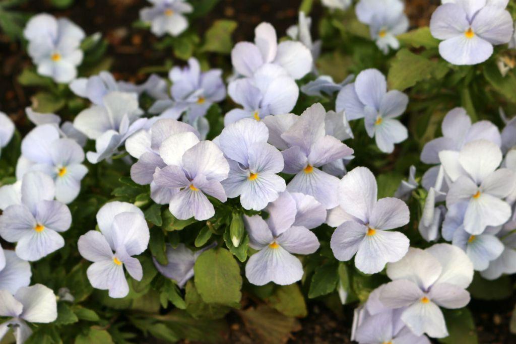 小樽 宏楽園 庭のお花2