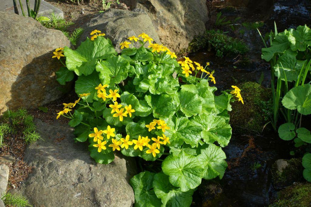 小樽 宏楽園 庭のお花