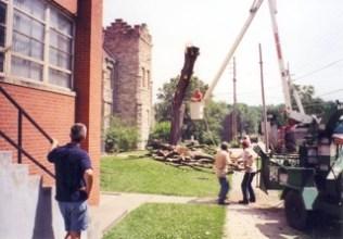 Tree is cut down
