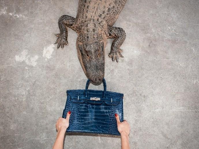 gator-birkin