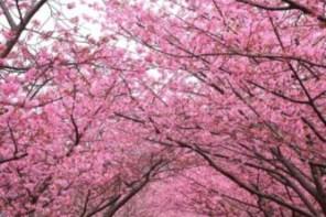 春天微風吹起的不只是櫻花風,更是面膜瘋!