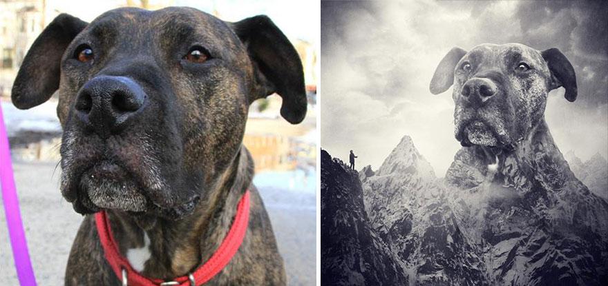 surreal-photography-shelter-dogs-sarolta-ban-1b