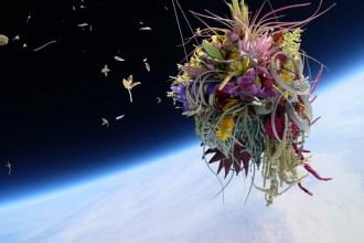 azuma-makoto-sends-plants-to-space-1