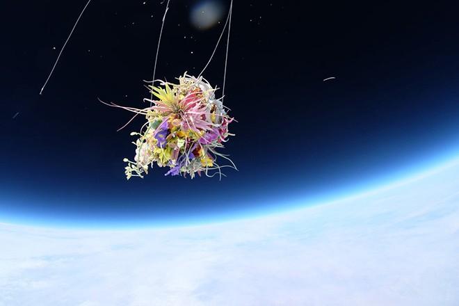 azuma-makoto-sends-plants-to-space-4