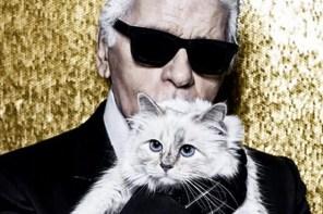 傻眼貓咪…老佛爺的貓可能將獲得 2 億美金的「遺產」…