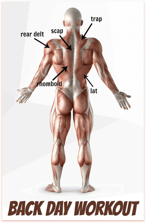 These posterior chain of muscle groups are the ones you target during your Back Day workout.