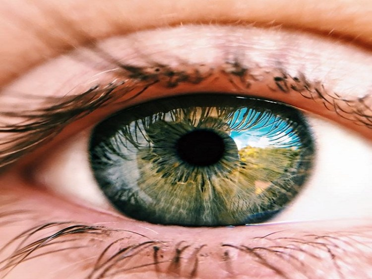 Picture of Eye