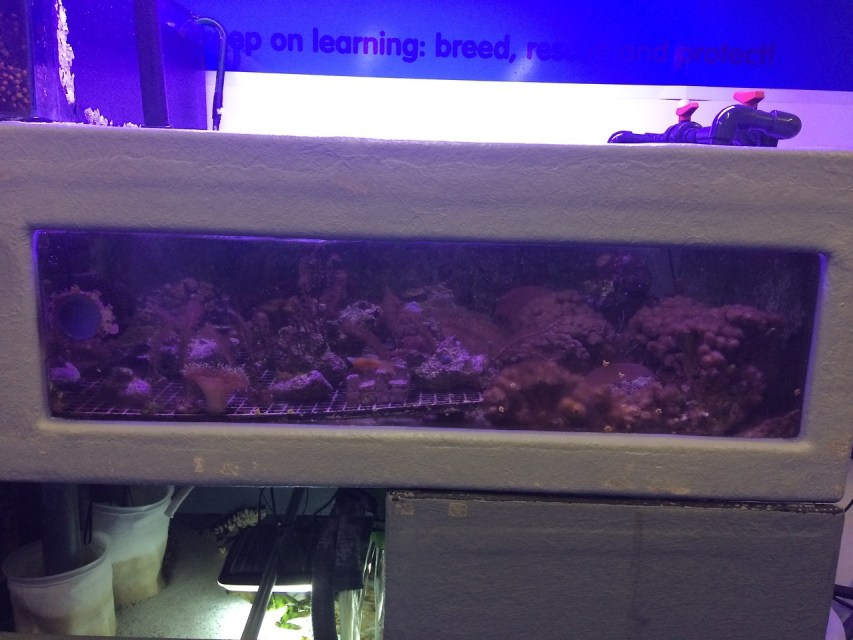 coral growing in a lab, the only place in the uk that does that I think?
