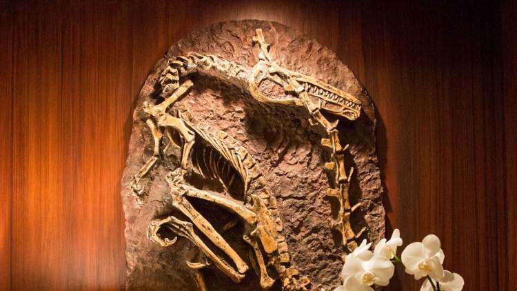 hilton-fossil