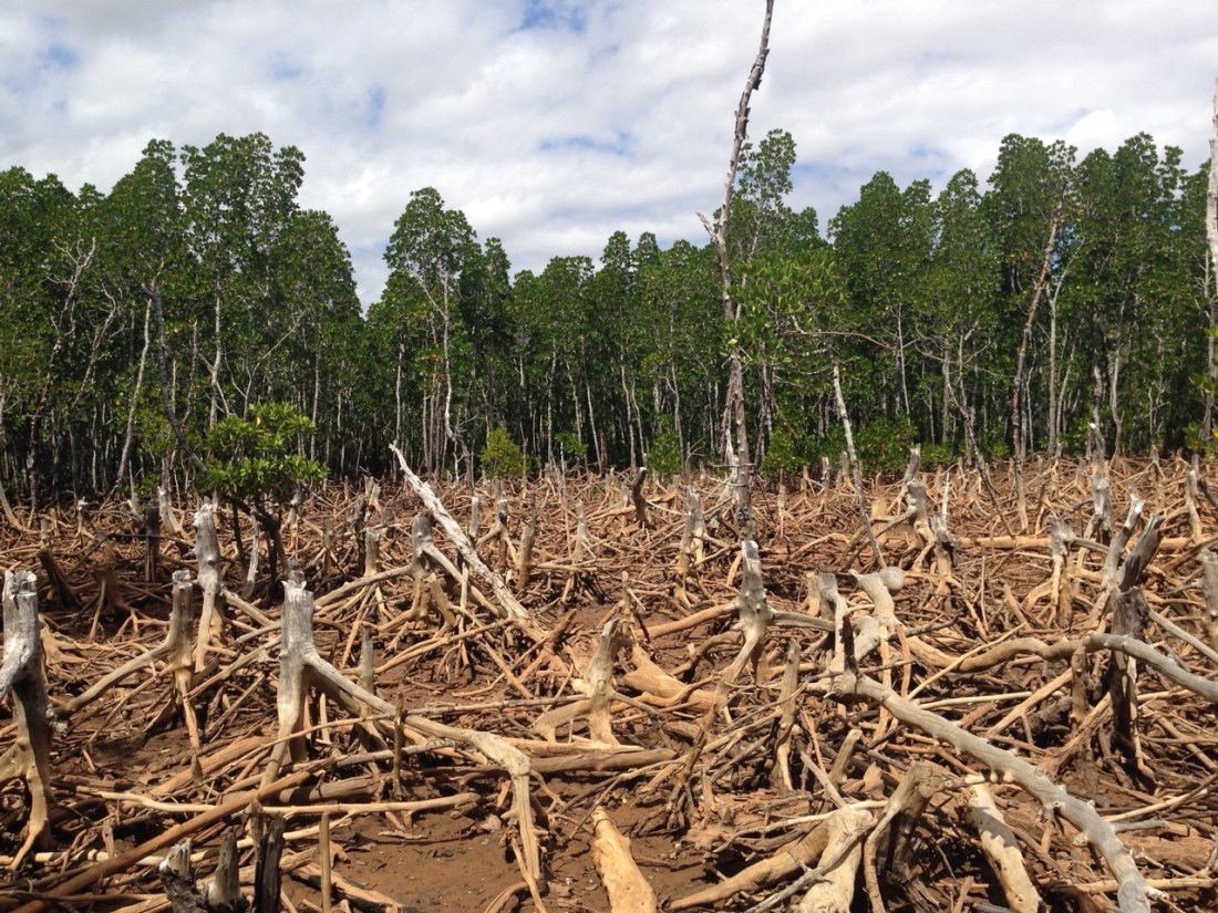 Deforestation in Madagascar- a habitat destruction  that have threatened many of Madagascar's endemic species or driven them to extinction