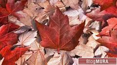 にほんブログ村 海外生活ブログ カナダ情報へ